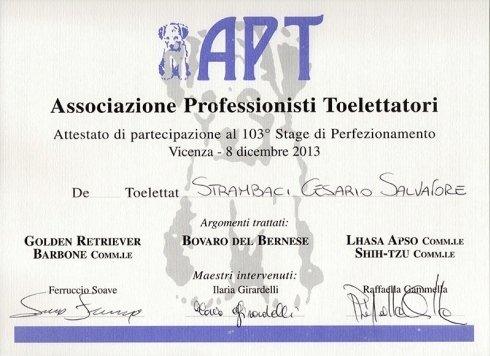 diploma di partecipazione