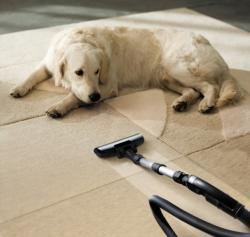 Equipment used for pet's odor removal services in Lincoln, NE