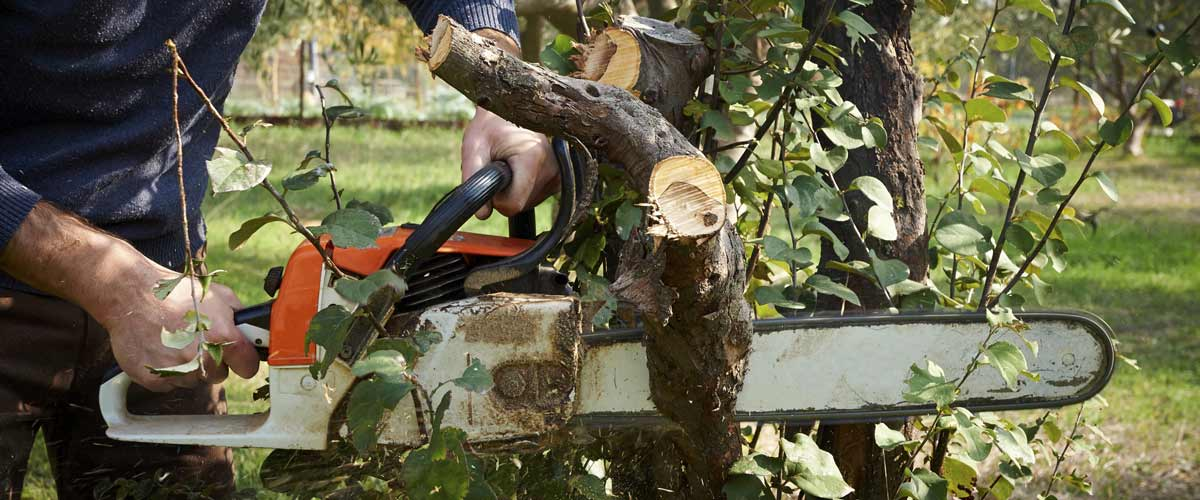 acro tree services professional and experienced arborists servicing