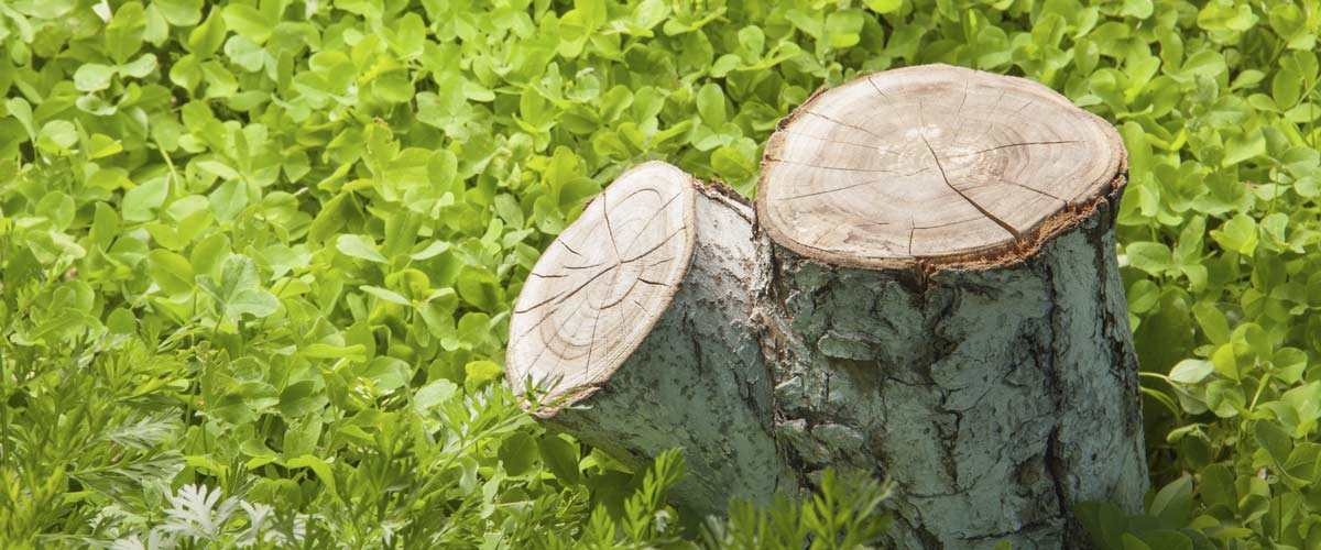 acro tree services tree reports and consulting