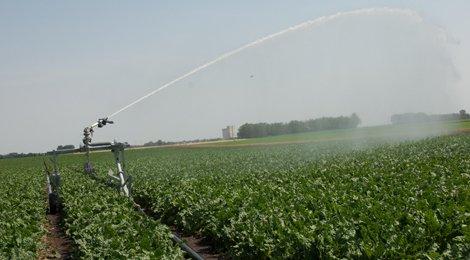 Sale Of Wide Range Sprinklers And Irrigation Boom York