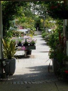 gardening experts