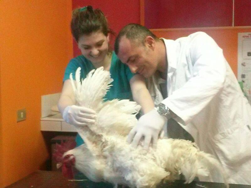 Centro Veterinario 2000 - cane con collare antipulci