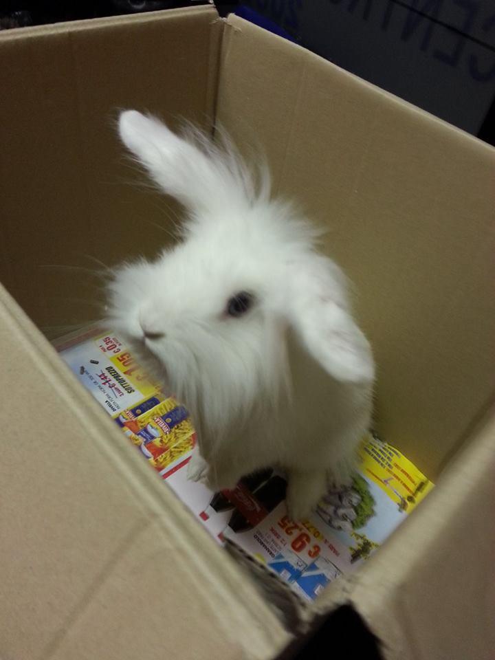 Centro Veterinario 2000 Putignano coniglio bianco