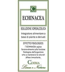 Echinea