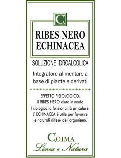 Ribes Nero Echinacea