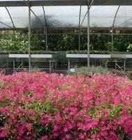 vendita al dettaglio e all'ingrosso di fiori e piante