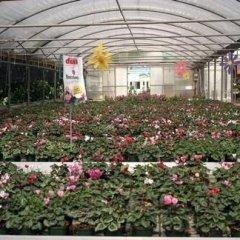 i nostri fiori, ortaggi e piante foto cinque