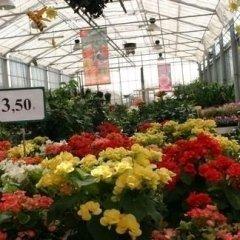 i nostri fiori, ortaggi e piante foto due