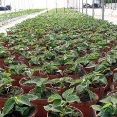 i nostri fiori, ortaggi e piante foto tre