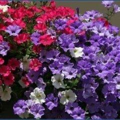 i nostri fiori, ortaggi e piante foto nove