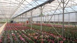 fiori e ortaggi