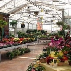 i nostri fiori, ortaggi e piante foto sette