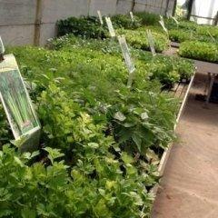 i nostri fiori, ortaggi e piante foto otto