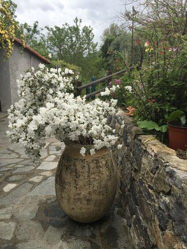 vaso di fiore bianco