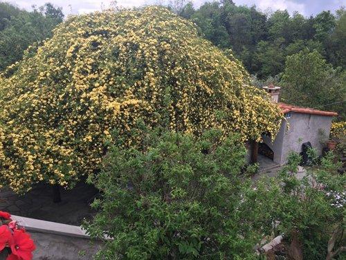 alberi con fiori gialli