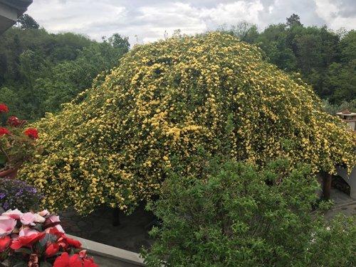 vista di alberi e fiori