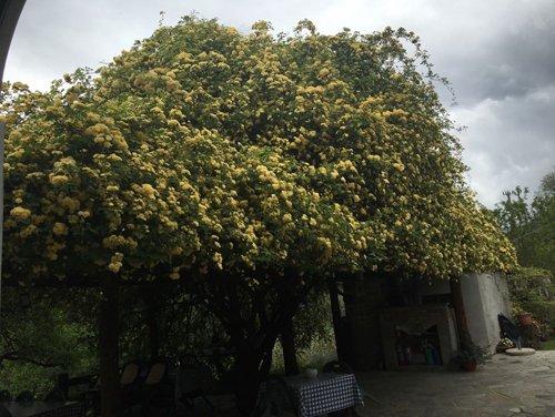 vista laterale di albero