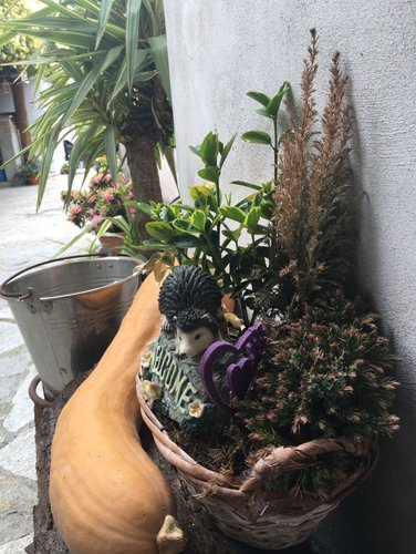 vasi con fiori