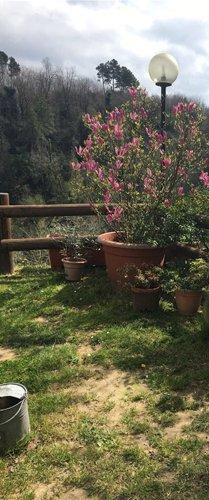 piante vicino a una sbarra in legno