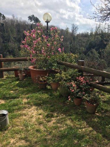 vista angolare del giardino con vasi di fiori vicino a una recinzione