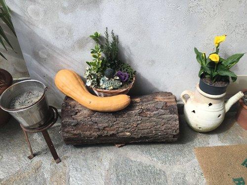 vaso di fiori sul legno