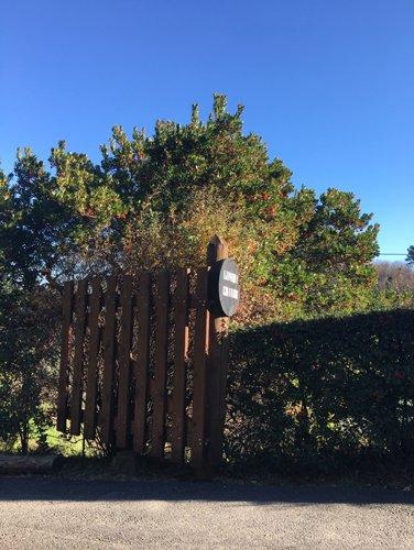 vista laterale di alberi