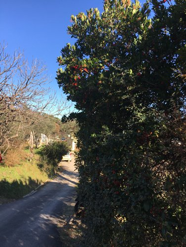 agriturismo alberi con strada