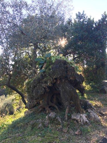 agriturismo alberi del grappa