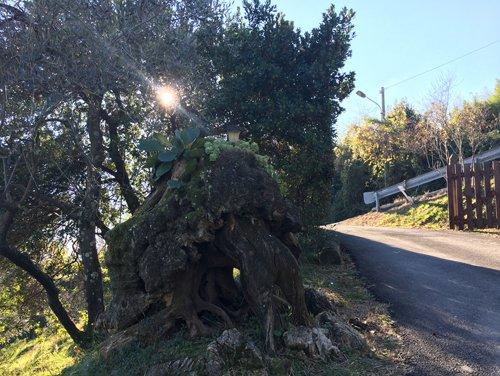 agriturismo alberi del grappa con strada