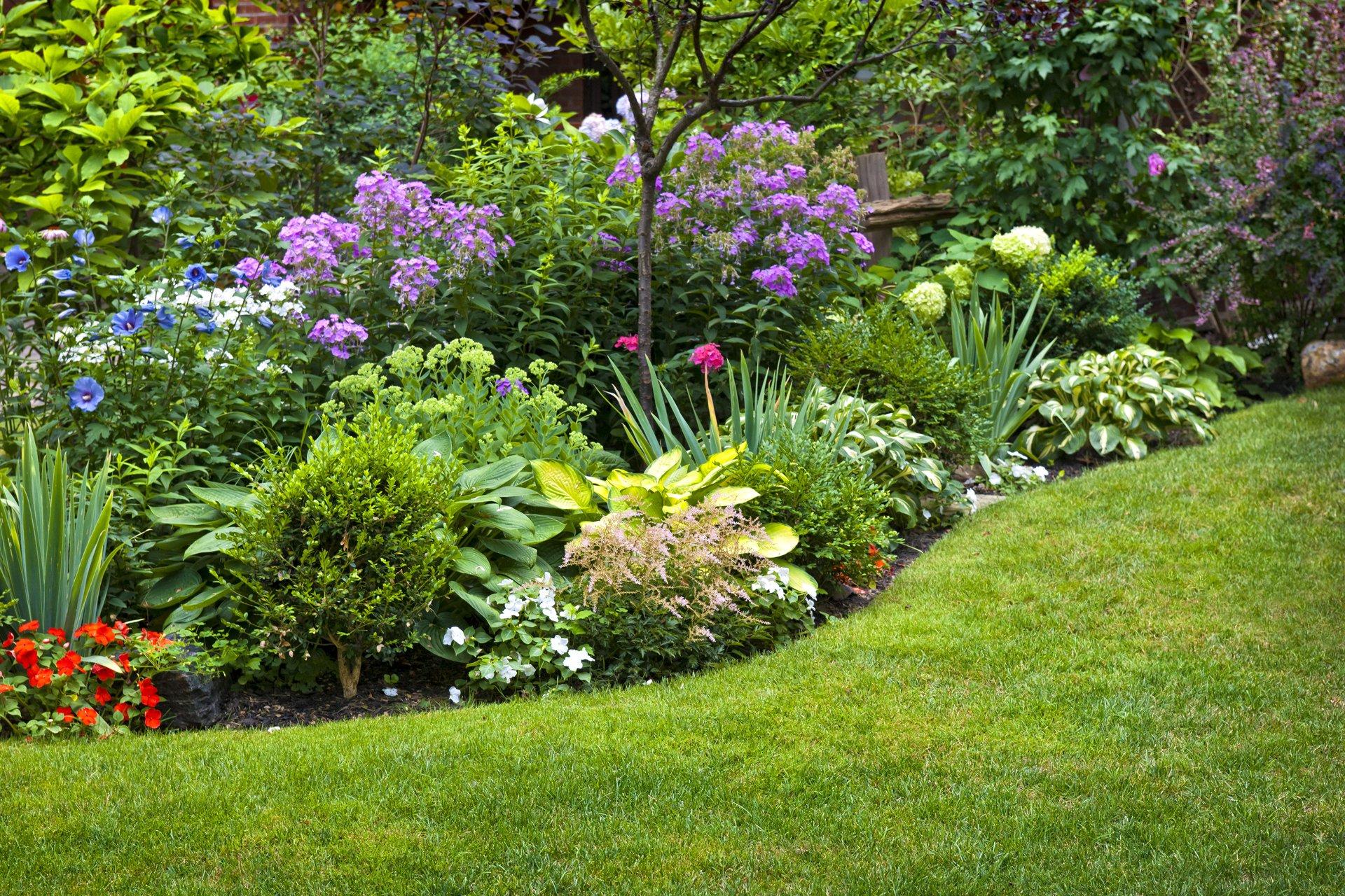 Beautiful green garden with flowers