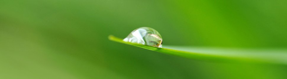 Conceptual image of company accounts - water droplet on grass