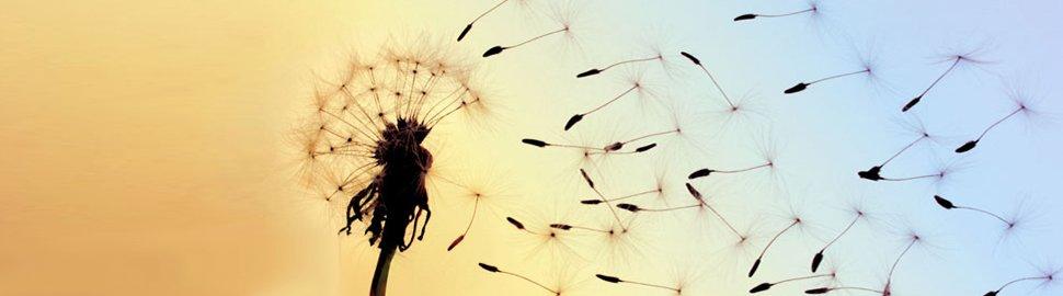 Conceptual image of audit services - Dandelion spores on breeze