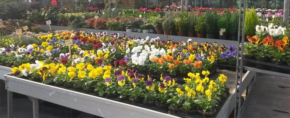 Garden Centre Como