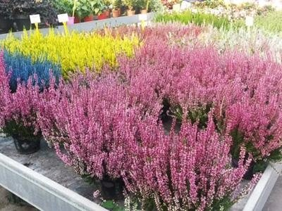 Fiori e piante vendita