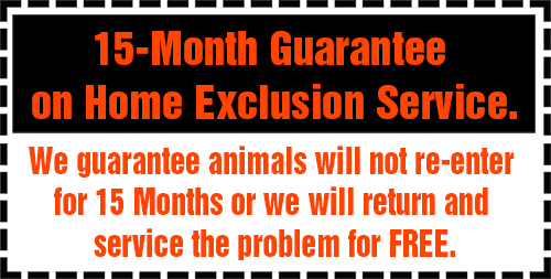 Guaranteed Rodent Removal & Wildlife Removal in San Antonio, TX & Austin, TX
