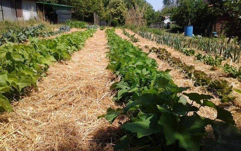 coltivazione legumi