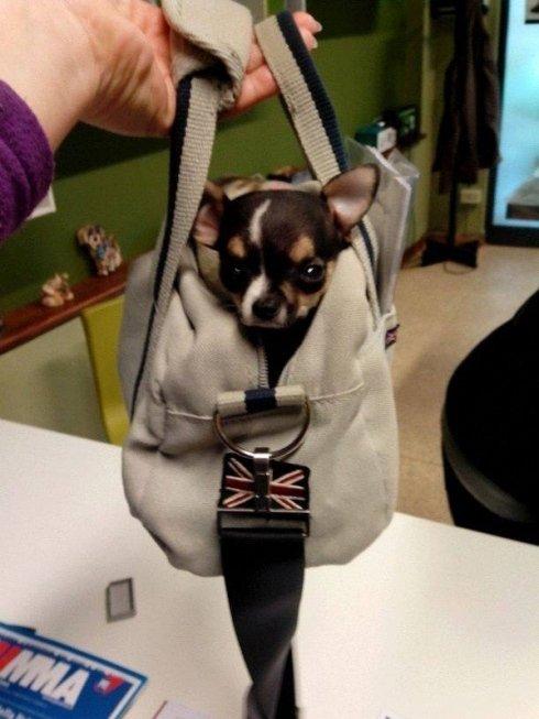 cane in borsa