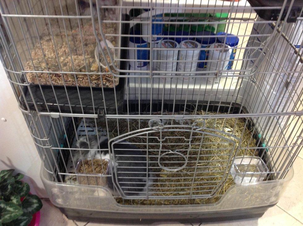 Vendita criceti e conigli