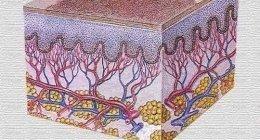 Dermoscopie, capillari, com'è fatto il nostro corpo, qualità, servizio