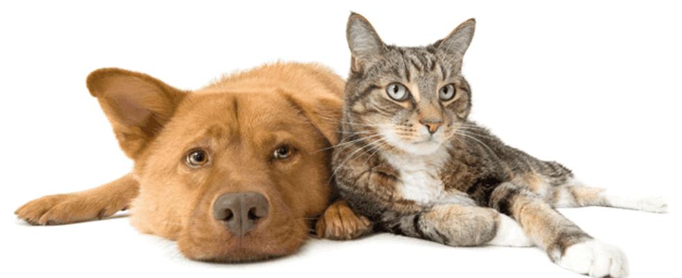 visite preventive veterinarie
