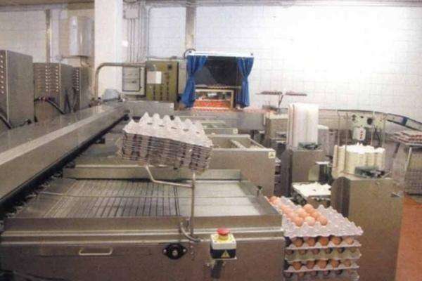 Macchinari per confezionare uova