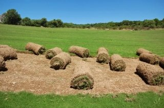 pelouse prête à poser arzachena