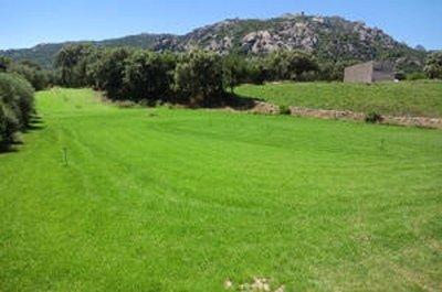 pelouse prête à poser santa teresa