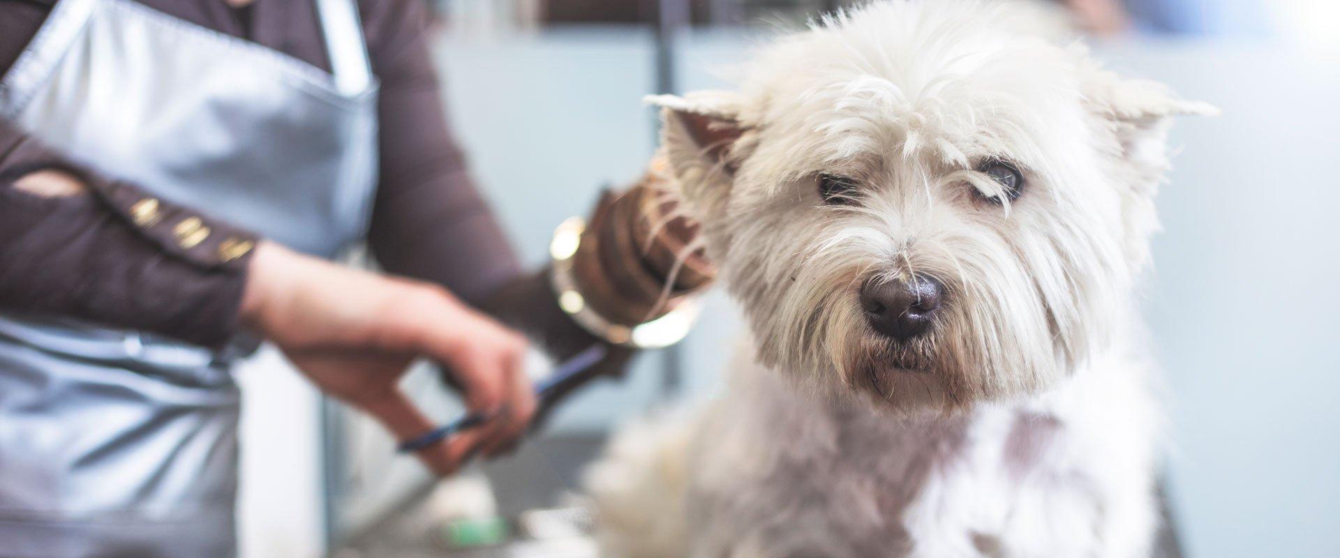 dog scissoring