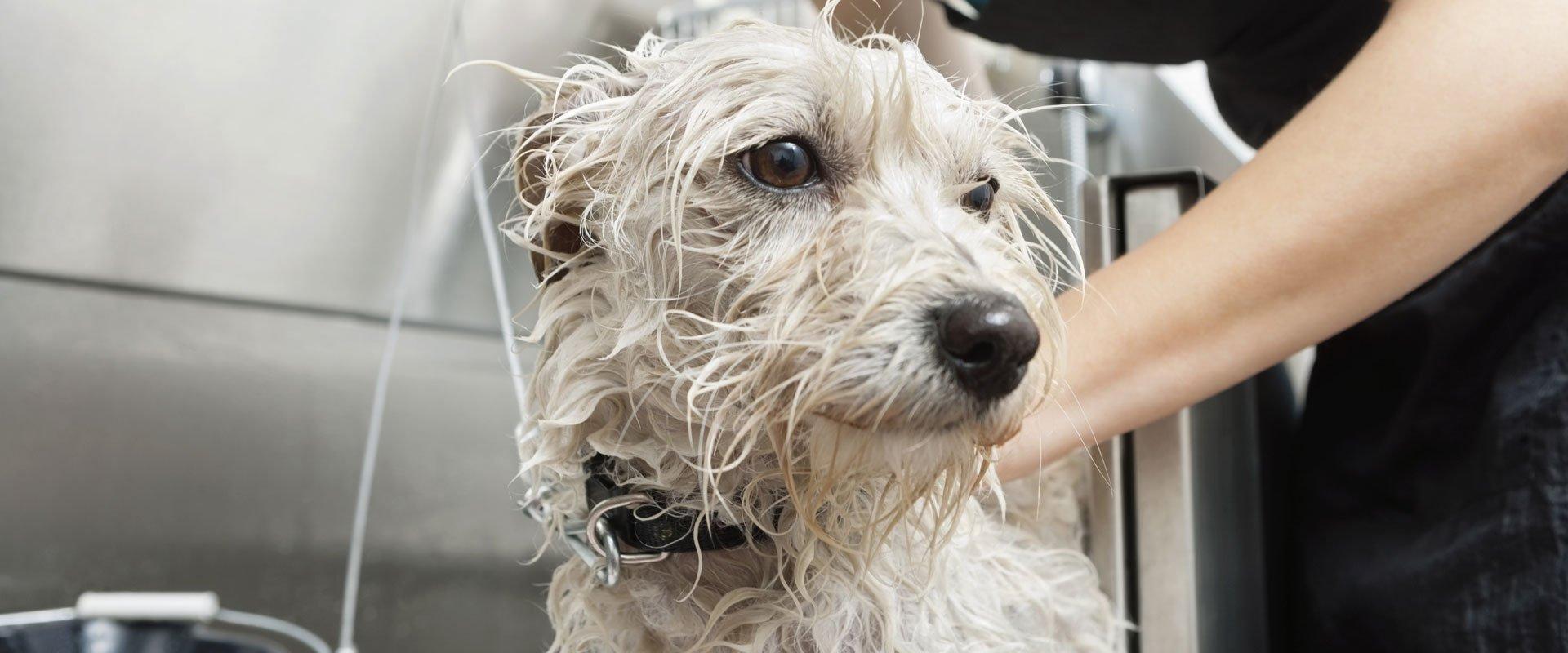 after dog wash