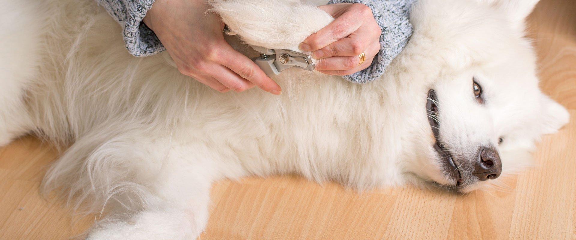 dog nail cutting