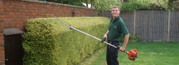 landscaping expert