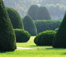 Hedge landscaping