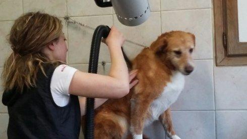 una donna che asciuga il pelo di un cane